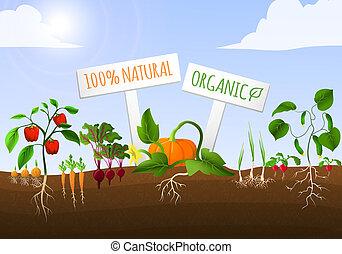 野菜, ポスター, 庭