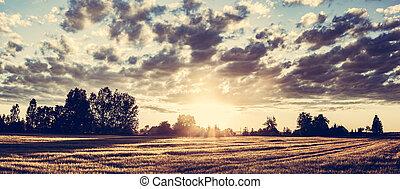 金, 小麦, 田舎, パノラマ, フィールド, sunset.