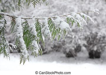 降雪, 間, ブランチ, 雪
