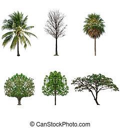 隔離された, セット, 白, コレクション, 木