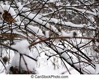 雪, ブランチ