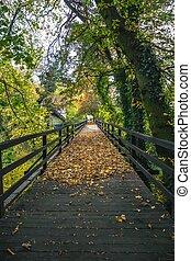 霧が濃い, 木製である, morning., 囲まれた, 歴史的, 秋, 橋, 色, ner, 城, loucen., 公園