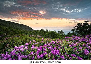 青い山, ツツジ, 峰, 景色, 春, 上に, nc, 日没, asheville, appalachians, パークウェイ, 花, 花