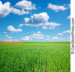 青い空, 緑のフィールド, 小麦, 積乱雲