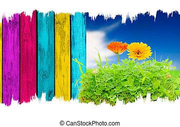 青い花, フェンス, 木製である, 上に, 空, 多彩, 背景, calendula, 草