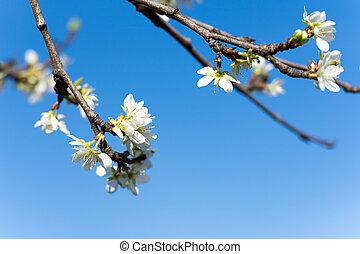 青い花, 空, 背景, 木