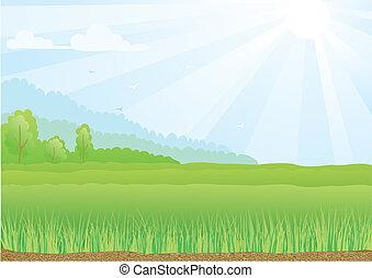 青, 光線, sky., 日光, イラスト, フィールド, 緑