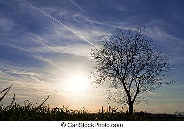 青, 前景, 雲, 空, はげ, 木。