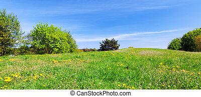 青, 夏, 牧草地, sky., パノラマ, 木, 草, 緑