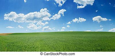 青, 小麦, パノラマ, 空フィールド, 緑