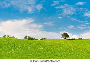 青, 牧草地, 空, 木, 緑, 曇り, 地平線