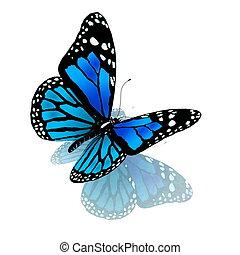 青, 色, 蝶, 白
