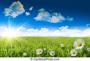 青, 野生 草, 空, ヒナギク