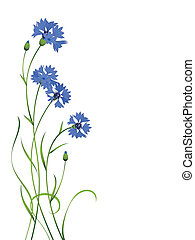 青, cornflower, 隔離された, 花束, パターン