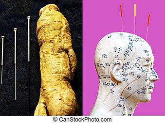頭, ジンセン, 刺鍼術の 針, モデル, 根