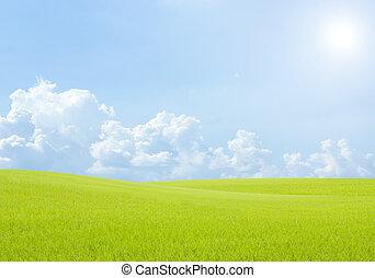 風景, フィールド, 背景, 空の雲, 青緑, 米, 草