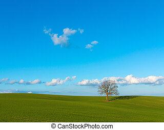風景, 田園, 景色, フィールド, 孤独, はげ, 木