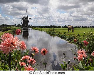 風車, オランダ, 風景