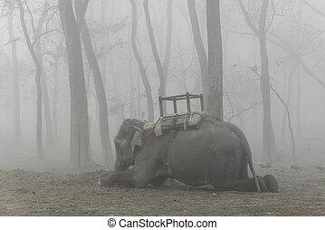 飼いならされる, あること, 象, 下方に