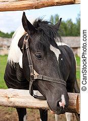 馬, あなたの, 家畜の囲い