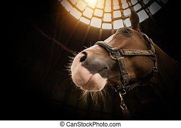 馬, クローズアップ, 納屋
