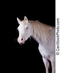 馬, 屋内