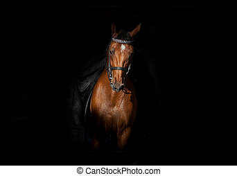 馬, 暗闇, ライダー