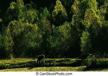 馬, 森林