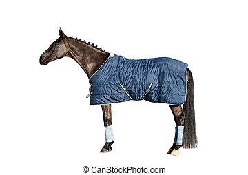 馬, 毛布, 隔離された