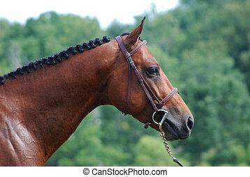 馬, 添え金, 頭, ショー