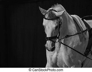 馬, 灰色, amunition