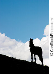 馬, 監視