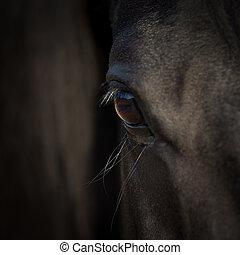 馬, 目, 細部, 暗い, バックグラウンド。, アラビア人, 黒, head., closeup.