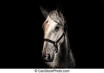 馬, 背景, 黒, 白