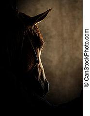 馬, 頭, 細部