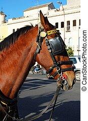 馬, 頭, seville., 添え金