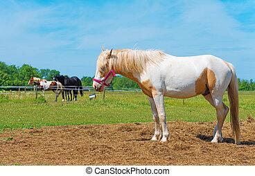 馬, bridle., スペース, text., 赤, あなたの