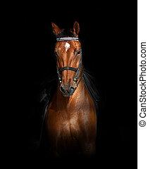 馬, dressage, 上に, 黒い背景, スポーツ