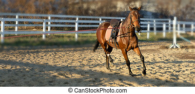 馬, dressage