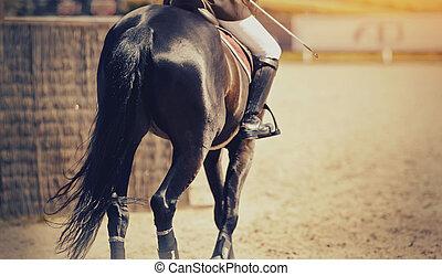 馬, dressage, arena.