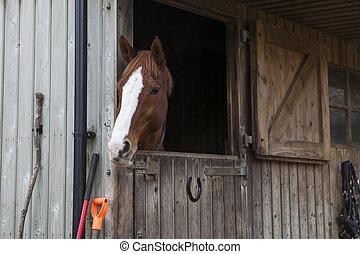 馬, manege, 安定した