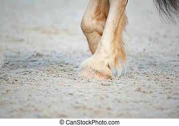 馬, shire, ひづめ