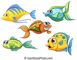魚, 5, カラフルである
