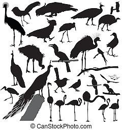 鳥, ベクトル, シルエット, セット