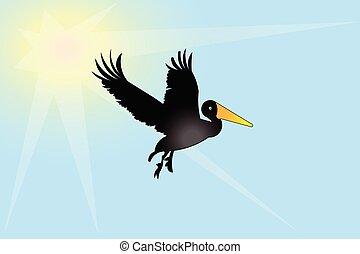 鳥, ペリカン