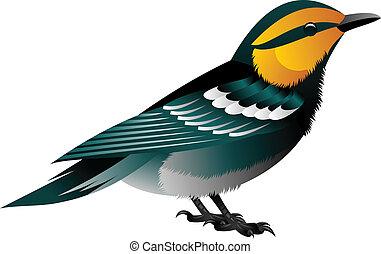 鳥, 率いられて黄色くなりなさい