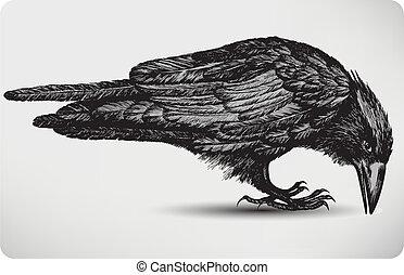 鳥, illustration., ベクトル, 黒, hand-drawing., ワタリガラス