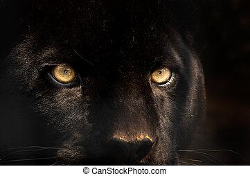 黒いヒョウ
