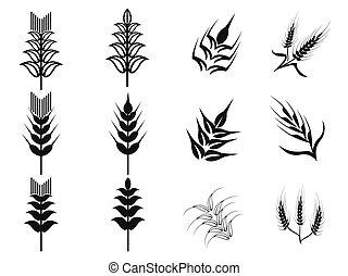 黒, セット, 小麦, アイコン