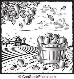 黒, 収穫, 風景, アップル